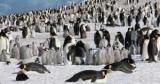 В Антарктиді знайшли гігантську колонію пінгвінів