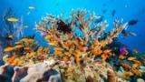 Великий Бар'єрний риф кілька разів гинув і воскресав